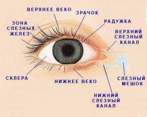 suhost-glaz-i-kontaktnie-linzi-2